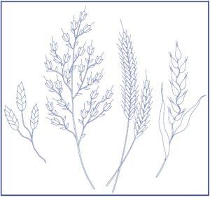 рисунок для вышивки гладью колоски
