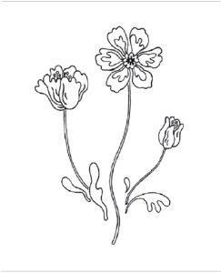 рисунок для вышивки гладью цветы